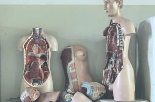 enfermedades autoinmunes musculatura