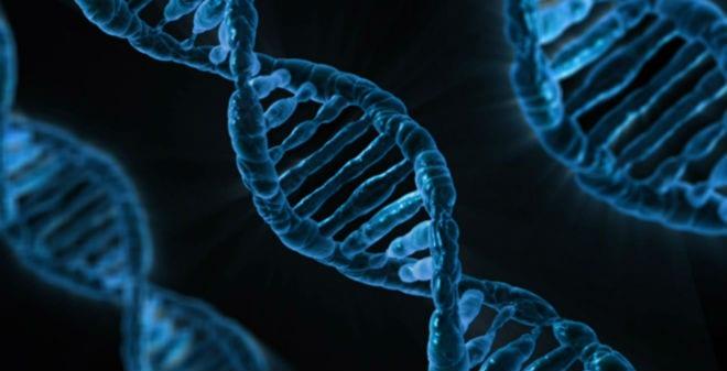 Científicos americanos descubren el reloj biológico del adn