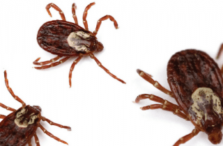 picadura de garrapata y enfermedad de Lyme