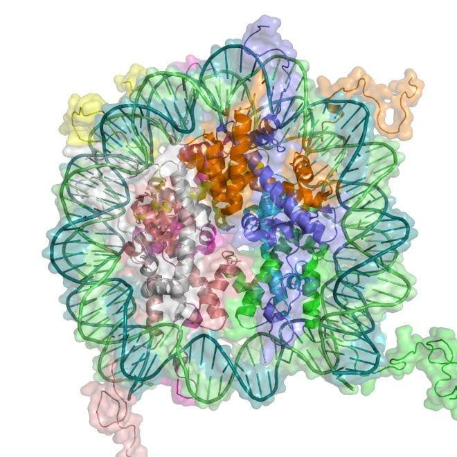 cambios_epigeneticos_influyen_en_lupus