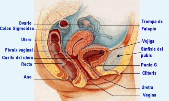 candidiasis vaginal e infeccion aparato urinario