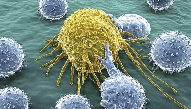 celulas t matan el cáncer