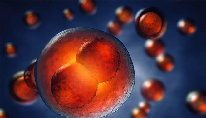 células madre para regeneración del cartílago