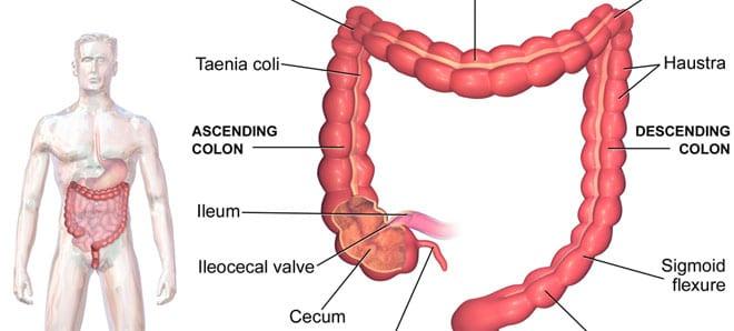 Hidroterapia de colon en el organismo