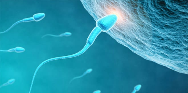 inseminación artificial, proceso sencillo
