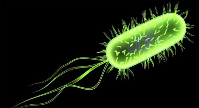 Intoxicación intestinal. E.coli