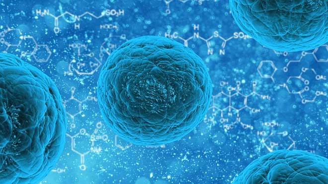Regeneración del cartílago con células madre