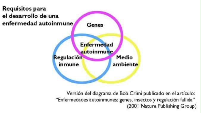 Requisitos para el desarrollo de enfermedades autoinmunes