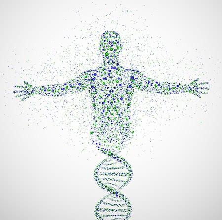 Telómeros y envejecimiento